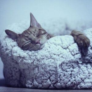 Για τον Υπνο