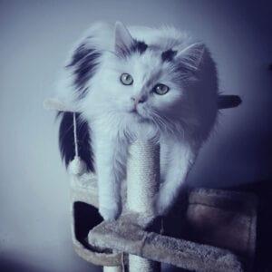 Παιχνίδια Γατας