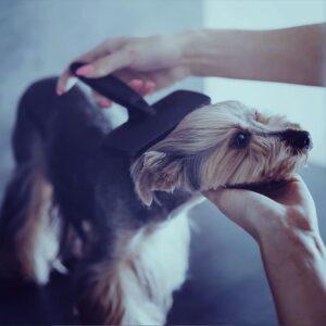Υγιεινη Σκυλου