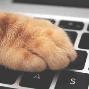 Συσκευές Γάτας