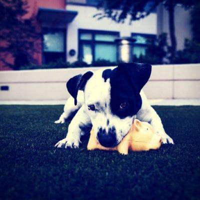 Παιχνιδια Σκυλου